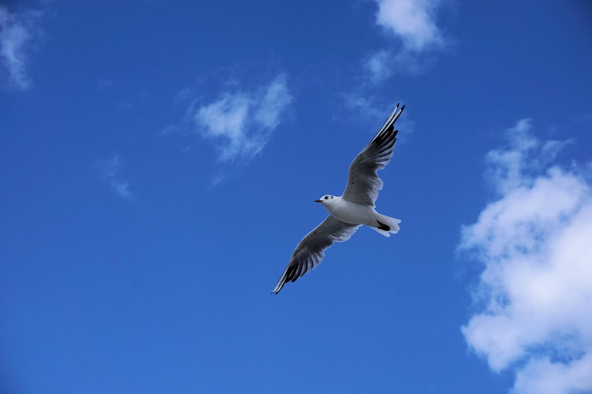 seagull-1637453_1920